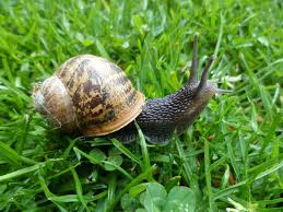 Snails, culture and nutrition